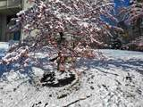 17D Snow Tree Lane - Photo 20