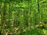 Danbury Woods Road - Photo 3