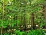 Danbury Woods Road - Photo 6