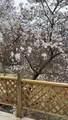 7 Split Oak Circle - Photo 11
