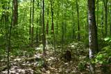 00 North Bear Swamp Road - Photo 5