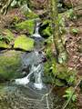 313 Mears Meadow Trail - Photo 21