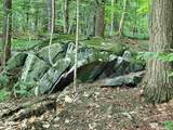 313 Mears Meadow Trail - Photo 22