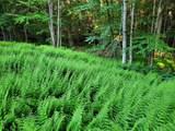 313 Mears Meadow Trail - Photo 23