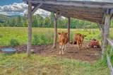 269 Burelli Farm Drive - Photo 3