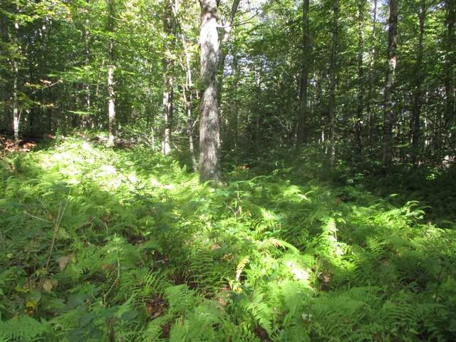 Lot A Marjorie Drive, Eden, VT 05652 (MLS #4827272) :: The Gardner Group