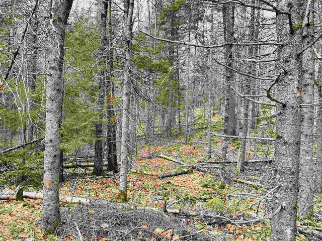Lot 1C Hoyt Brook Road, Danbury, NH 03230 (MLS #4853991) :: Signature Properties of Vermont