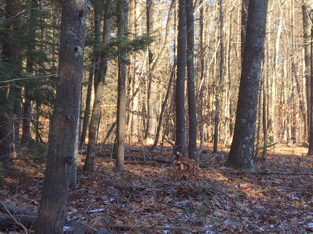 17 Neal Hill Road #17, Tuftonboro, NH 03816 (MLS #4677822) :: Keller Williams Coastal Realty