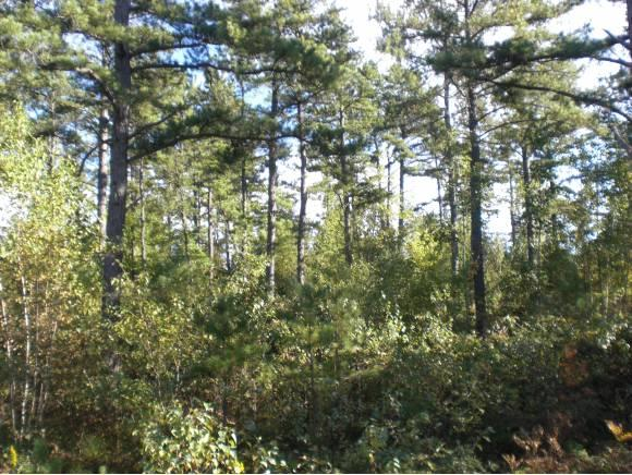 Lot 9 Caitlin Drive, Brownfield, ME 04010 (MLS #4688857) :: Lajoie Home Team at Keller Williams Realty