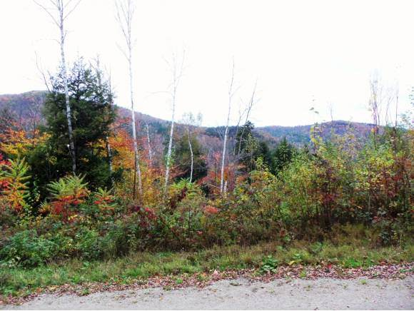 Lot 3 Mount Hunger Road - Photo 1