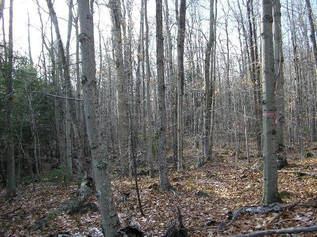 116-23 Red Coat Lane - Photo 1