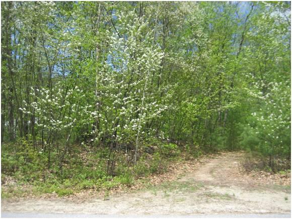 Lot 13 Mountain Ridge Road, Ashland, NH 03217 (MLS #4224669) :: Keller Williams Coastal Realty