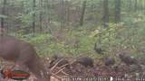 27600 Side State Rd 328 - Photo 16