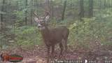 27600 Side State Rd 328 - Photo 5