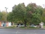 26571 Redwood Drive - Photo 30