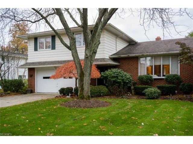 5384 Meadow Wood Blvd, Lyndhurst, OH 44124 (MLS #3956588) :: The Crockett Team, Howard Hanna