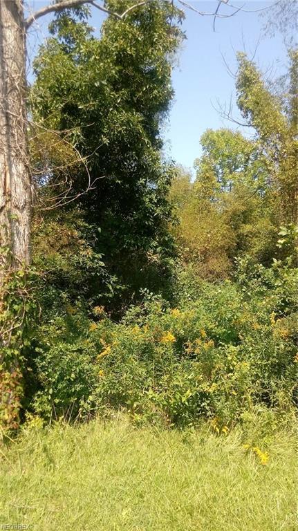 6193 River Rd, Madison, OH 44057 (MLS #4037642) :: Keller Williams Chervenic Realty