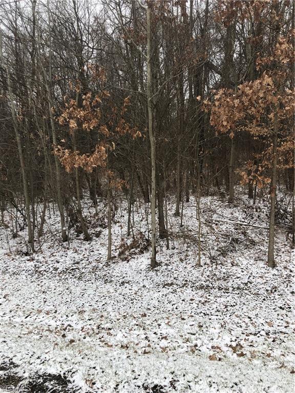 Old Chippewa Trail, Doylestown, OH 44230 (MLS #4119313) :: The Crockett Team, Howard Hanna