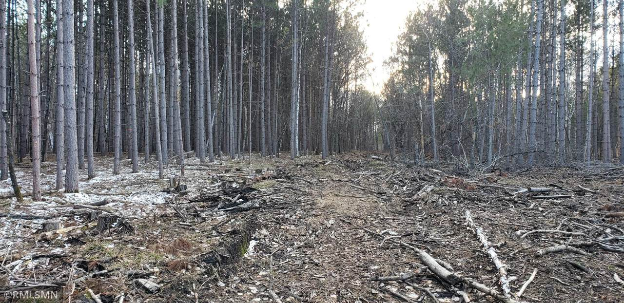 15695 Crescent Ridge Trail - Photo 1