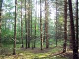 Lot3 Blk 1 Falling Leaf Trail - Photo 2