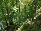 2610 Cedar Falls Road - Photo 1
