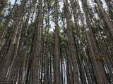 ABC Circle Pines Drive - Photo 2