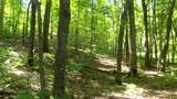 6.58 ACRES Chippewa Trail - Photo 1