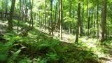6.58 ACRES Chippewa Trail - Photo 5