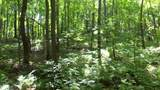 6.58 ACRES Chippewa Trail - Photo 7