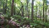 6.58 ACRES Chippewa Trail - Photo 8