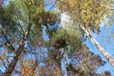 TBD Humming Bear Lane - Photo 9
