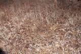 32XXX Ivywood Trail - Photo 45