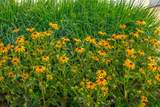 11385 Wildflower Drive - Photo 56