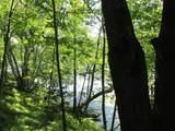 xxx White Pines Trail - Photo 18