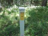 xxx White Pines Trail - Photo 8