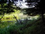 Lot 7 Blk 1 Falling Leaf Trail - Photo 2