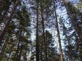 TBD Lot 4 Echo Pine Trail Ne - Photo 13