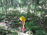 xxx White Pines Trail - Photo 11