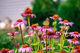 11385 Wildflower Drive - Photo 55