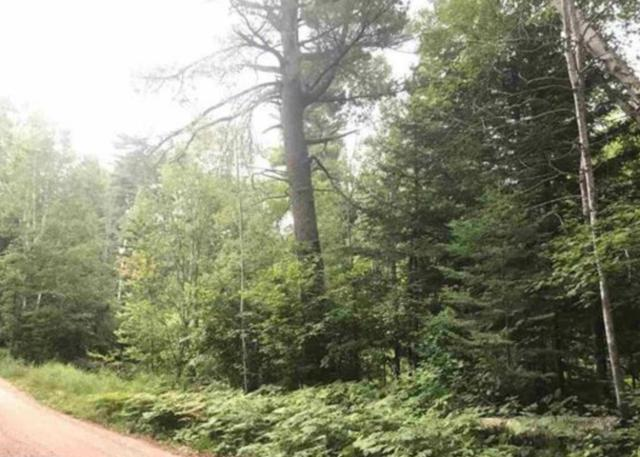 Parcel C,D,E Niles Bay Forest Road, Buyck, MN 55771 (#5243328) :: House Hunters Minnesota- Keller Williams Classic Realty NW