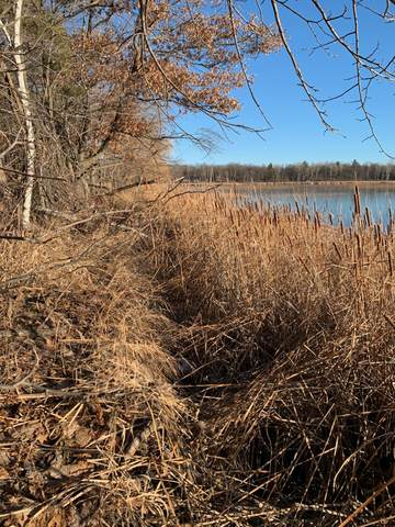 Parcel G County Road 30, Crosby, MN 56441 (#5753274) :: Tony Farah | Coldwell Banker Realty