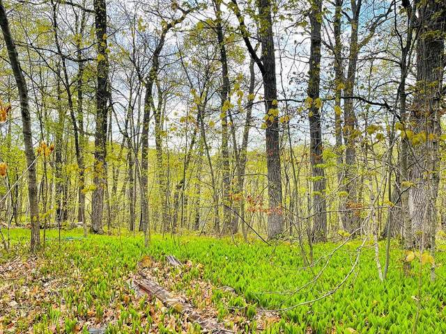 Lot 15 Blk 3 County Road 138, Garrison, MN 56450 (#5758313) :: Bos Realty Group