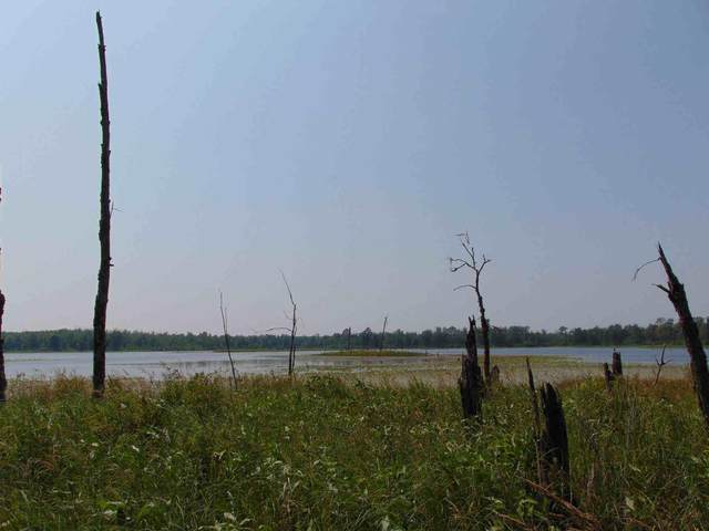 TBD Spider Lake Forest Road, Laporte, MN 56461 (#6047008) :: Lakes Country Realty LLC