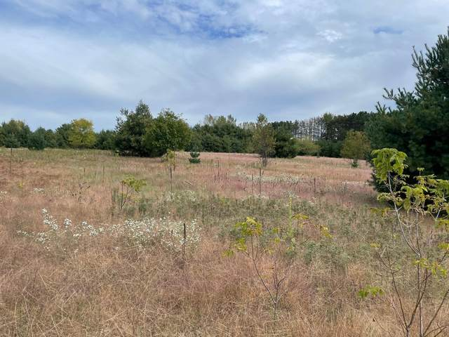 Lot 3 County Road D, Colfax, WI 54730 (#6106155) :: The Preferred Home Team