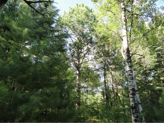 5995 Voyageurs Trail, Biwabik, MN 55708 (#4767052) :: The Preferred Home Team