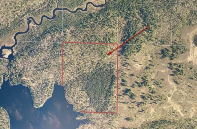 TBD Little Elbow Lake, Beatty Twp, MN 55723 (#5488442) :: Servion Realty