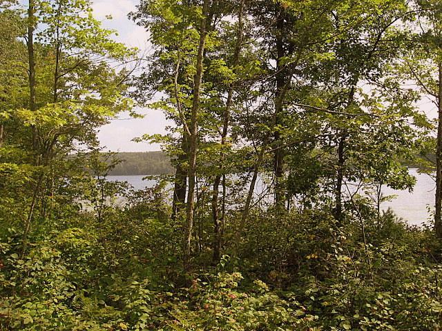 Lot 10 Tanglewood Parkway, Hayward, WI 54843 (#4496787) :: The Preferred Home Team
