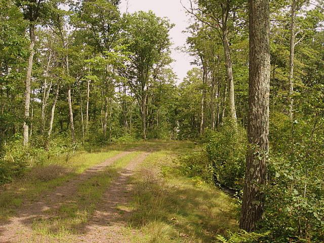 Lot 16 Tanglewood Parkway, Hayward, WI 54843 (#4496811) :: The Preferred Home Team