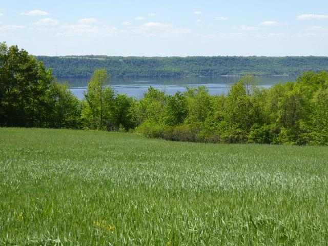 16 acres 440th Street, Maiden Rock, WI 54750 (#4980393) :: The Snyder Team