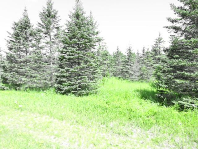 TBD Bear Den Dr Sw, Pine River Twp, MN 56435 (#5265227) :: The Michael Kaslow Team